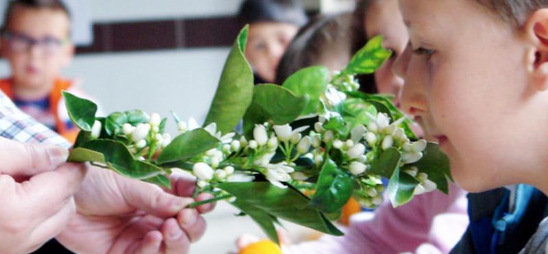 Ateliers pour enfants 2014 – Photos C.P. Recaredo Centelles(La Vall d'Uixó, Castellón)