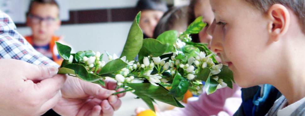 Talleres infantiles 2014 – Fotos C.P. Recaredo Centelles (La Vall d'Uixó, Castellón)