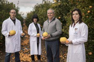 Las clemenulesnacieron por casualidad en 1953, un mandarino clementino del pueblo de Nules (Castellón) sufrió una mutación espontánea, un regalo para los agricultores, al ser más grandes y mejor adaptadas al terreno que las clementinas originales.