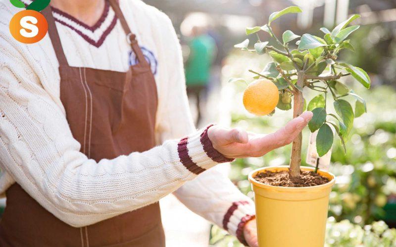 ¿Cómo saber que una Naranja es Recién Cogida?