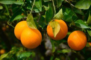 Beneficios de la Naranja para la Salud