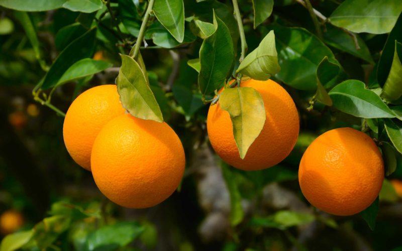 Les Avantages de l'Orange pour la Santé