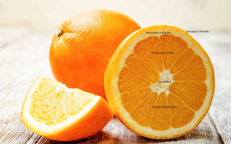Parties d'une orange. Anatomie d'un agrume.