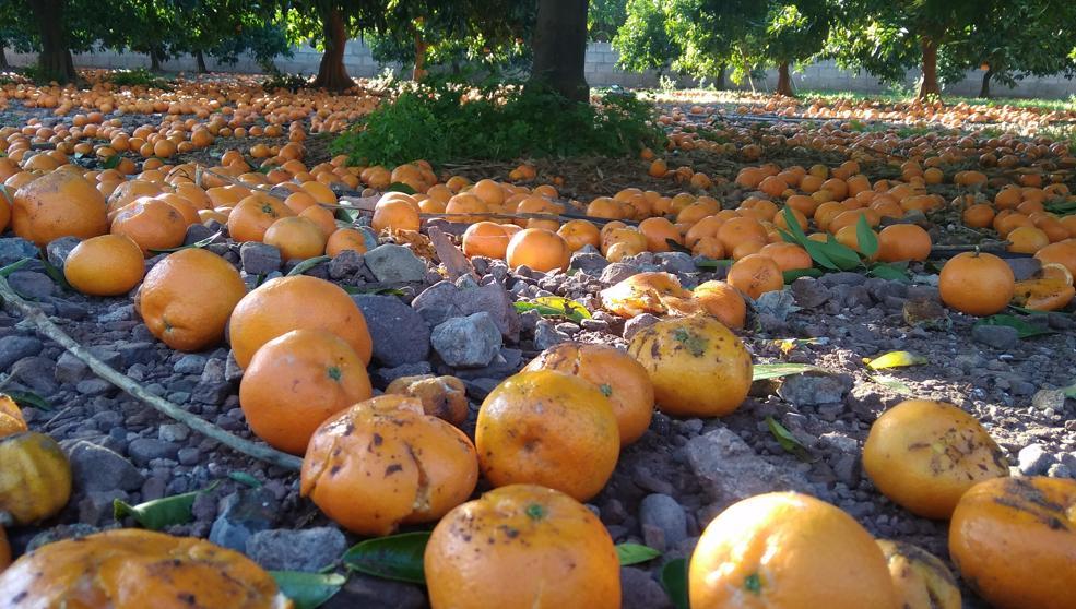 Naranjas cultivadas con 50 químicos prohibidos en la UE
