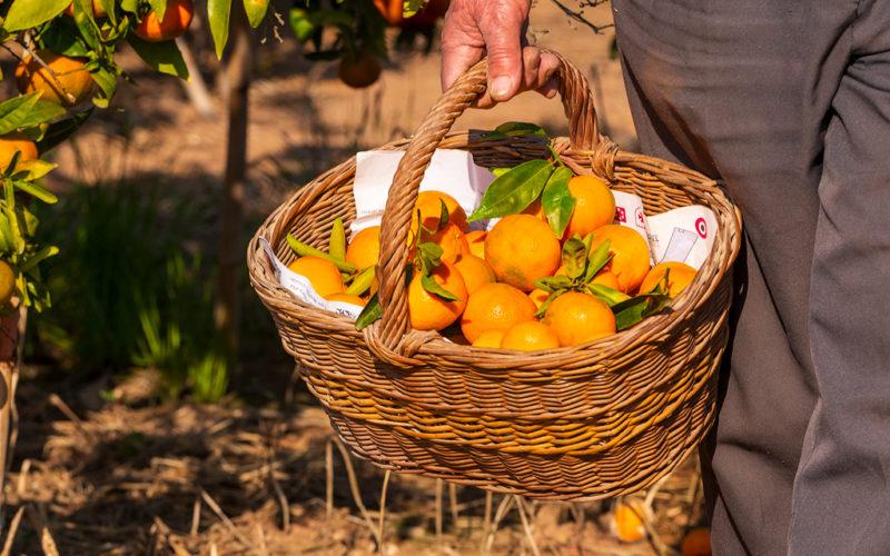 Dieta de la Naranja.