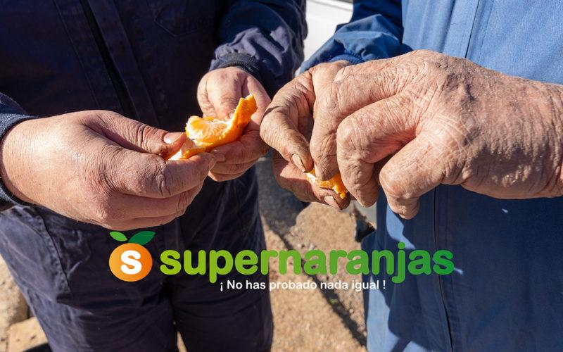 Las manos que recolectan nuestras naranjas.