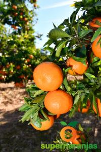 2021 Año Internacional de las frutas y las verduras.